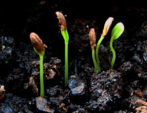 sementeiras2