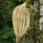 Costa-Rica-P4200623