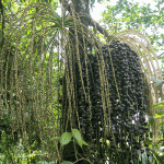 Costa-Rica-P4200640