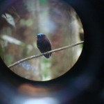 Refúgio de Aves Dr. Alexander Skutch - Los Cosingos