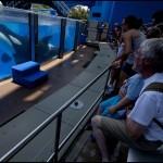 Orcas no Aquaworld | Foto Nuno Ferreira Santos