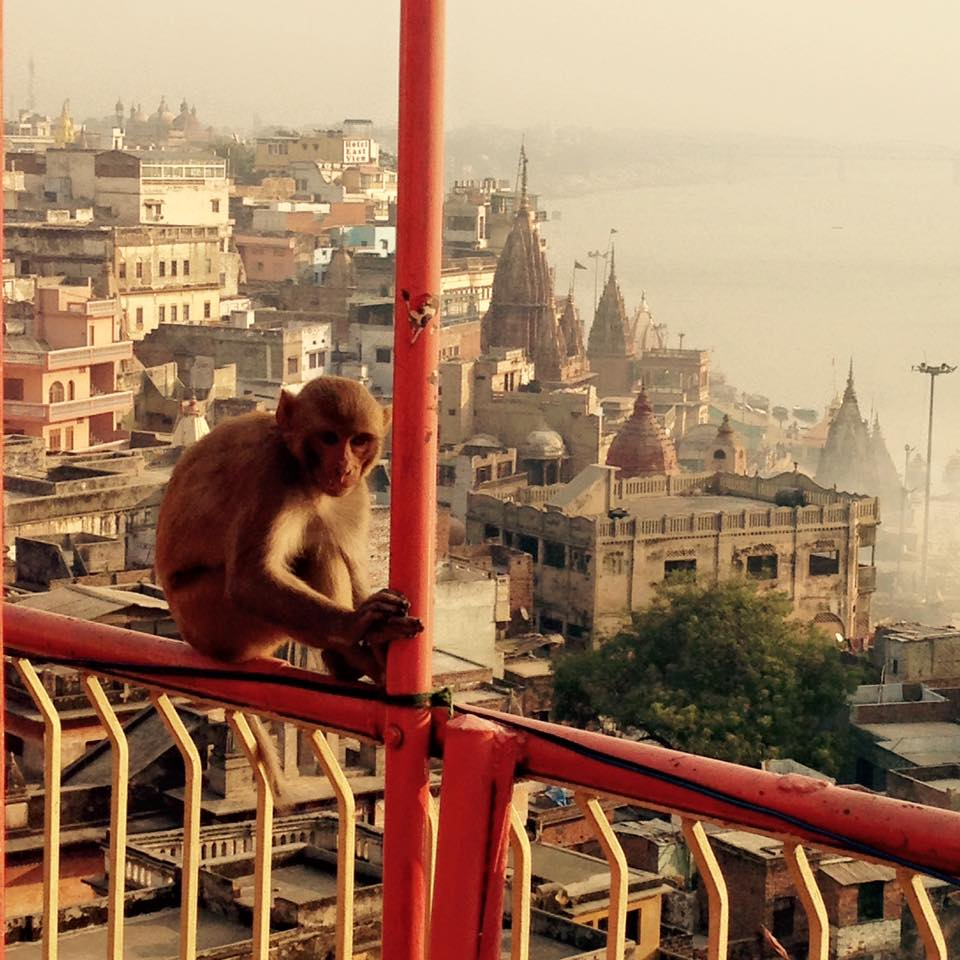 macaco mjl
