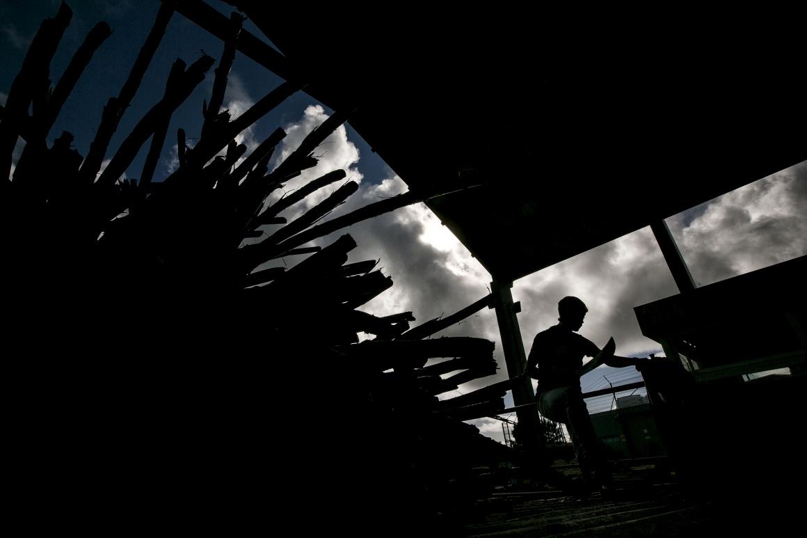 Engenhos - Madeira - Foto de Daniel Rocha