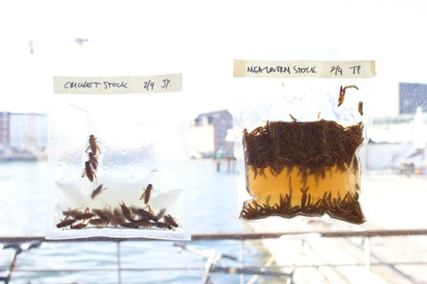 NFL+INSECTS+WEEK+1-48